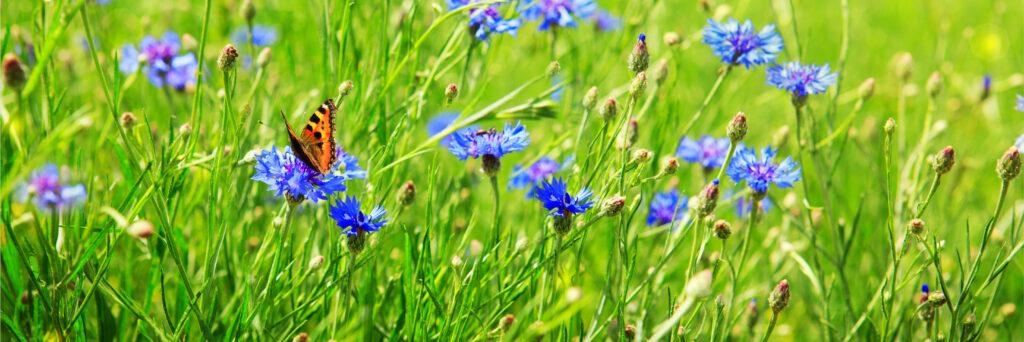 Blühflächen sind lebendige und nachhaltige Landschaften