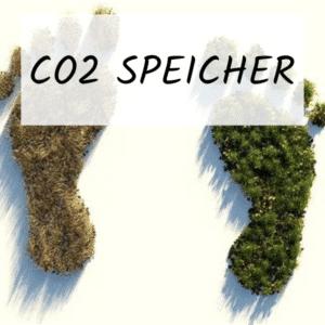 Werden Sie jetzt Blühpate des Projekts CO2-Speicher