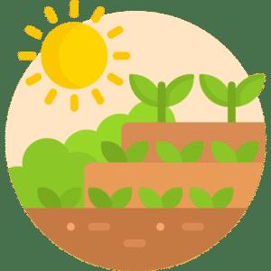 Was passiert auf der Blühfläche Blühende Pflanzen im Sommer