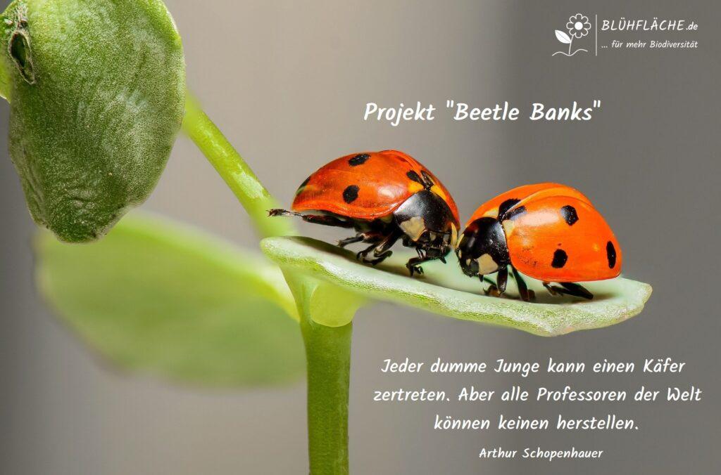 Beetle Banks Insektenwälle Käferbank Projekt Blühfläche