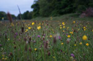 Warum ist Biodiversität so wichtig Blühfläche