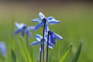 Biodiversität fördern - mit einer Blühwiese